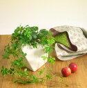 シュガーバイン多面体の陶器鉢