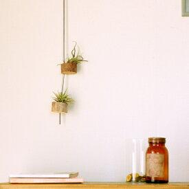 エアープランツとか、多肉植物とかポンと載せると可愛いかも!手作りの流木プラントハンガー※植物は別売り