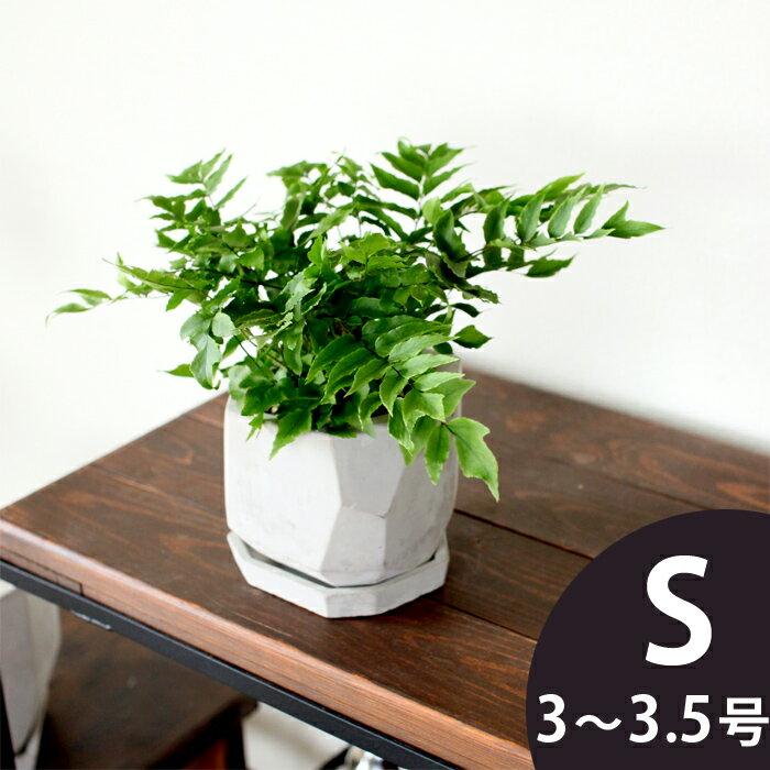超COOL!でもボテッとしたシルエットに、可愛さも感じる。コンクリートのような質感&多面体の植木鉢※植物は商品には含まれません【3号〜3.5号サイズの植物向け】
