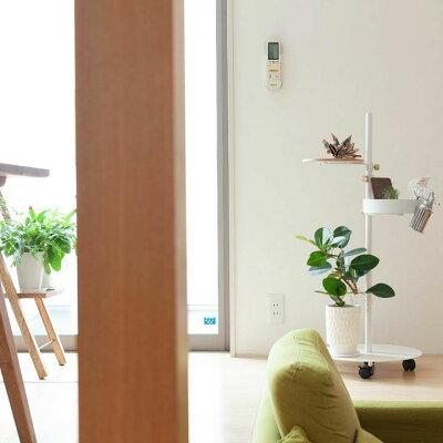 【9/20〜のお届け】観葉植物今月のおすすめ!フランスゴムを、陶器鉢に植えて。
