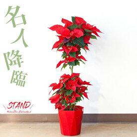 【予約品:お届けは11/11〜】ポインセチア・イタリアンレッド※同梱不可商品です(今月の植物)