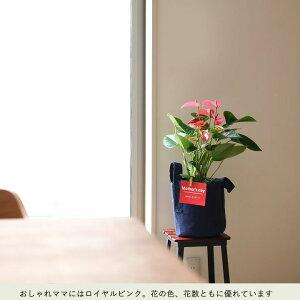 【送料無料母の日ギフト】名人・小松さんが育てたアンスリュームinRootPouchの布鉢(同梱不可)