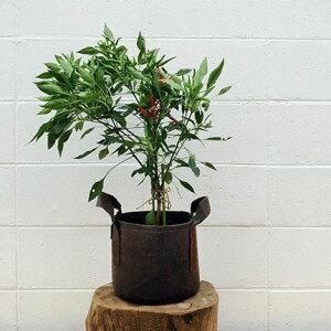 不織布の植木鉢・持ち手type(L)【幅28cm×高さ26cm】