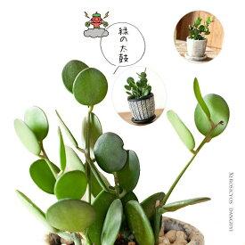 グリーンドラム緑の太鼓♪(今月の植物)
