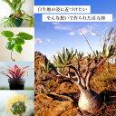 【送料込み】植物の根を活性化させる活力剤・ブラックウォーター