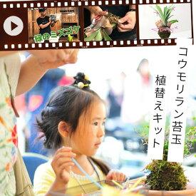 【Let's!園芸教室】コウモリラン苔玉「植え替えキット」(動画配信チケット付き)