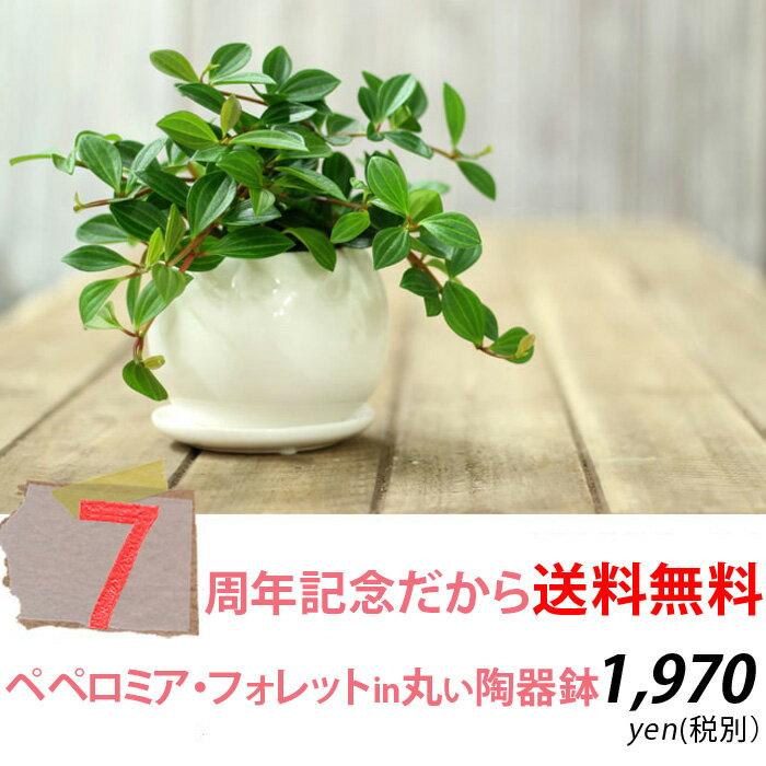 4月だけ!【ポイント2倍】※お届けは4/24〜【送料無料】育てやすくて可愛い観葉植物ペペロミア・フォレット