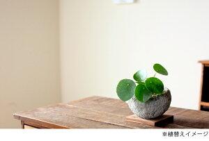 ●お届けは10/27〜これ、面白い!手作り。流木チップ素材をもとに作った植木鉢に紐サボテン(リプサリス)を植えてみました。一般の花屋では中々見る事ができない、作家物のような逸品!【観葉植物多肉植物サボテン】