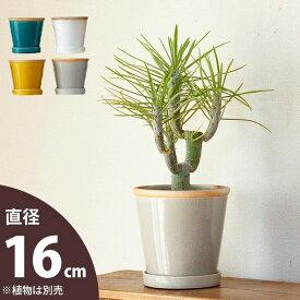 綺麗なツヤ。貫入模様も入っていい感じな植木鉢M(16cm)