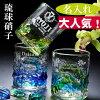 【名前入り】復活再入荷琉球ガラス元祖美ら海ロックタンブラー