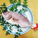 【愛媛の海産物】【愛媛の人気おとりよせ】浦安水産 蒸し焼き鯛 1尾<お取り寄せ><ギフト>