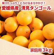 リベラル愛媛県産清見タンゴール家庭用3kg