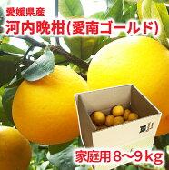 はなき農園愛媛県産河内晩柑(愛南ゴールド)ご家庭用8〜9kg