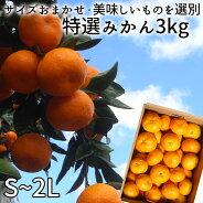 (株)濱田農園【サイズおまかせ・美味しいものを選別】特選みかん(S〜2L)3kg