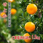 リベラル愛媛県産高級柑橘せとかご家庭用1.5kg