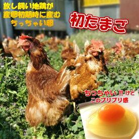鶏卵 放し飼い卵 初卵 100個入 産地直送 生食用卵 九州産福岡県産 自然卵 送料無料 お中元 お歳暮 破損補償