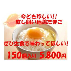 卵 たまご 産地直送 放し飼い卵 150個入 生食用卵 九州産福岡県産 自然卵