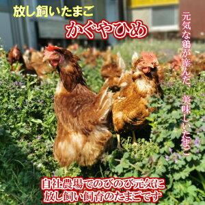 鶏卵 放し飼い卵 かぐやひめ 20個入 産地直送 生食用卵 九州産福岡県産 お中元 お歳暮 自然卵