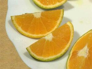 栗山園の国産バレンシアオレンジ5kg【ご家庭用】【送料無料(沖縄1000円)】