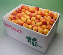 和歌山県 かつらぎ町の梅完熟 小玉南高梅約10kgサイズ混合 L、Mサイズ中心