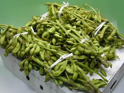 赤井さんの丹波黒豆枝豆「若さや」約3kg