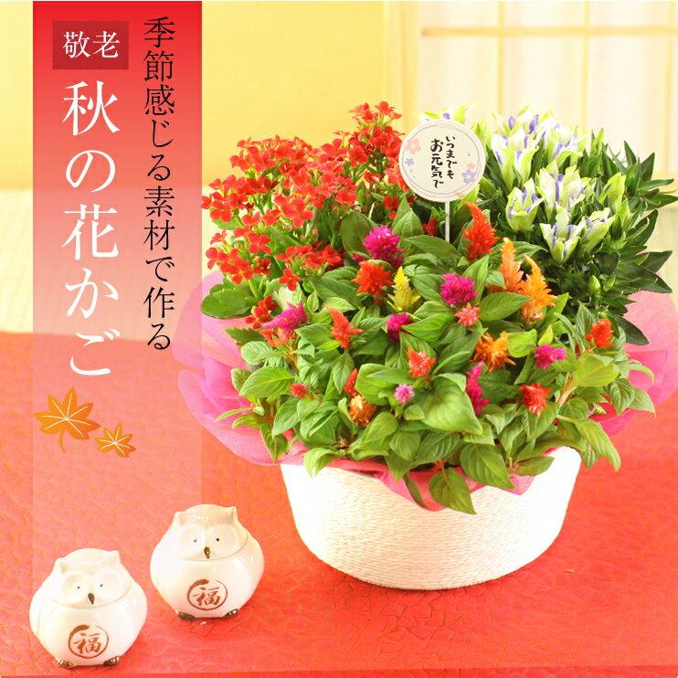 敬老の日 花【花かご ギフト】3種の花で作る季節の花かごギフト敬老の日