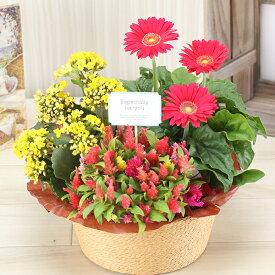 誕生日 花 ギフト 鉢植え 3種の花で作る季節の花かご【ハピネス】 敬老の日