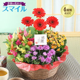 誕生日 ギフト 花 プレゼント 鉢植え 花 寄せ鉢 4種の花で作る季節の花かご 敬老の日