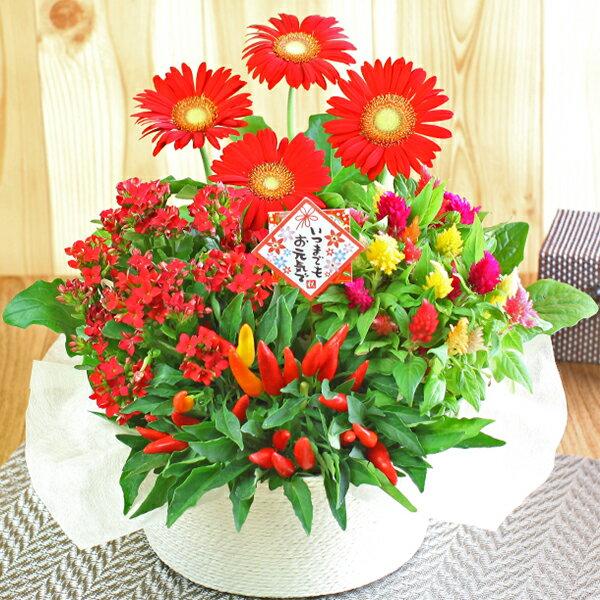 誕生日 ギフト 花【花かご】4種の花で作る季節の花かごギフト敬老の日 プレゼント