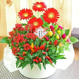 鉢植え 花 寄せ鉢 4種の花で作る季節の花かご
