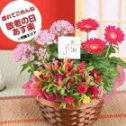 敬老の日 ギフト 花【花かご】3種の花で作る季節の花かごギフト敬老の日 プレゼント