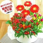 敬老の日 鉢植え 花 寄せ鉢 4種の花で作る季節の花かご