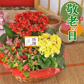 敬老の日 花 ギフト【花かご】3種の花で作る季節の花かごギフト誕生日 プレゼント