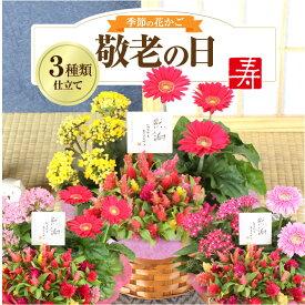 敬老の日 ギフト 花 プレゼント 【花かご】3種の花で作る季節の花かごギフト誕生日 プレゼント