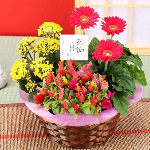 誕生日 ギフト 花【花かご】3種の花で作る季節の花かごギフト敬老の日 プレゼント