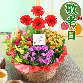 敬老の日 花 ギフト 鉢植え 花 寄せ鉢 4種の花で作る季節の花かご 誕生日