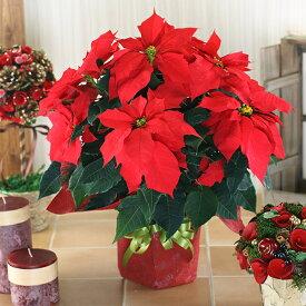 ポインセチア 鉢花 5号鉢 ギフト用 鉢植え 誕生日 クリスマス プレゼント 花 お歳暮