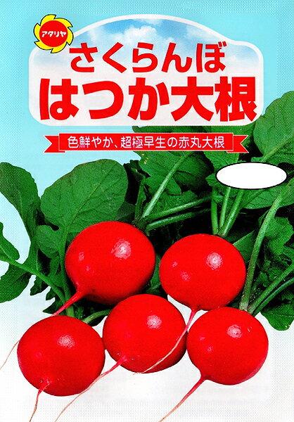 【クーポン配布中】アタリヤ農園 野菜種 はつか大根 さくらんぼメール便対応 B13-068
