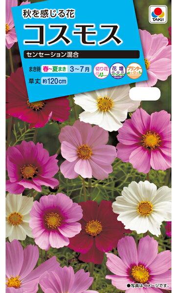 【クーポン配布中】タキイ種苗 花種 コスモス センセーション混合 メール便対応 (B02-053)