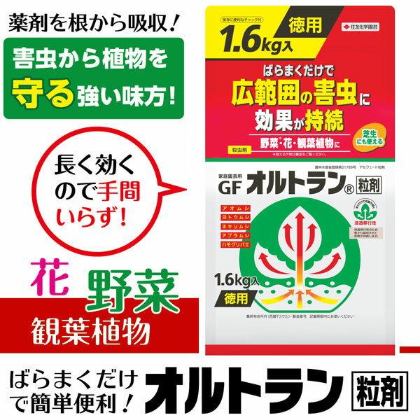 【クーポン配布中】住友化学園芸 殺虫剤 GFオルトラン粒剤 1.6kg