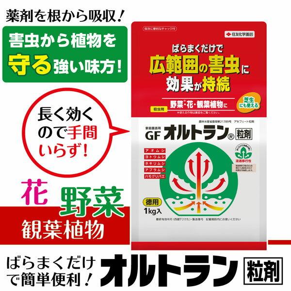 【クーポン配布中】住友化学園芸 殺虫剤 GFオルトラン粒剤 1kg
