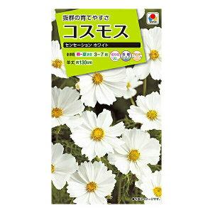 タキイ種苗 花種 コスモス センセーションホワイト M