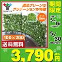 【あす楽】 山善(YAMAZEN) グリーンフェンス リーフラティス(約100×200cm) LLH-12R/LLS-12R ナチュラルグリーン グリーンフェン...