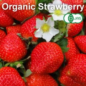 【有機JAS・無農薬】 冷凍 ストロベリー 1kg 【トルコ産】【冷凍食品以外と同梱不可】【冷凍いちご・苺】