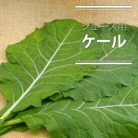 【特別栽培・無化学農薬(無農薬)】 ジュース用ケール(生)1kg 【生葉】【静岡・高知産】