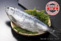 北洋産沖獲り熟成紅鮭