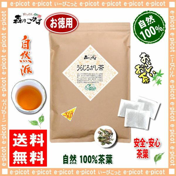 【お徳用TB送料無料】 うらじろがし茶 (3g×80p)「ティーパック」≪ ウラジロガシ茶 100%≫ 裏白樫茶 森のこかげ 健やかハウス