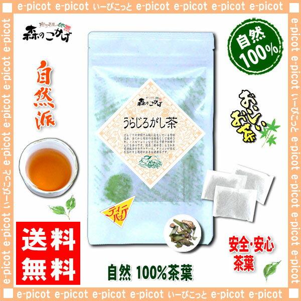 【送料無料】 うらじろがし茶 (3g×20p)「ティーバッグ」≪ ウラジロガシ茶 100%≫ 裏白樫茶 森のこかげ 健やかハウス