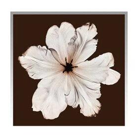 『アートフレーム Steven N.Meyers Ruffled Tulip』 アートフレーム フレーム 壁飾り 額縁 壁掛けインテリア 壁掛けアート ディスプレイフレーム インテリアフレーム 写真 Steven N.Meyers Ruffled Tulip おしゃれ 北欧 正方形 モダン 壁掛け式 ギフト 贈り物