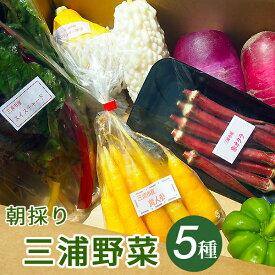 朝採り三浦野菜セット(5種類)